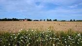 Farmland with bright blue sky — Stock Photo