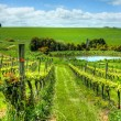 Beautiful Australian Vineyard - Stock Photo