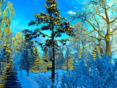 Frozen forest — Stock Photo