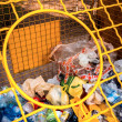 Various plastic garbage — Stock Photo