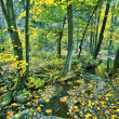 Stock Photo: Creek in fall time