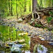 Creek in fall time — Stock Photo