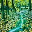 Creek in fall time — Stock Photo #9085329