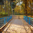 Stock Photo: Blue bridge in the forest