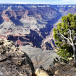 Stock Photo: Colorado canyon