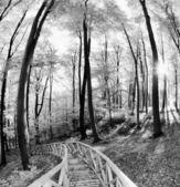 Beech canopy — Stock Photo