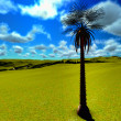 Stock Photo: Solitary palm tree