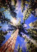 Baldachim drzewo — Zdjęcie stockowe