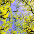 Tree canopy — Foto de stock #9406412