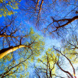 Tree canopy — Stock Photo #9406416