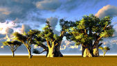 African baobabs — Stock Photo