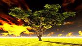 Albero di acacia grandi nelle pianure dell'africa savana aperta — Foto Stock