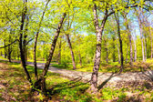 Spring time in park — Stock Photo