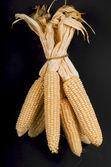 Dried ripe corn — Stock Photo