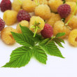 Stock Photo: Yellow raspberry