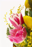 Beautiful spring flowers — Stock fotografie