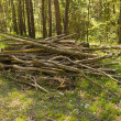 Royalty-Free Stock Photo: Piled firewood in the forest