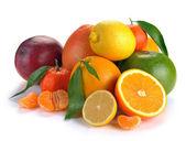 柑橘系の果物のセット — ストック写真