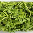 Stock Photo: Cress salad