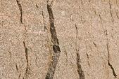 Texture granitique — Photo