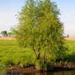 Tree on river bank — Stock Photo