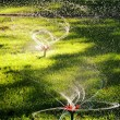 Sprinkler of automatic watering — Stock Photo #8080956