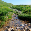 Beautiful mountain stream - Stock fotografie