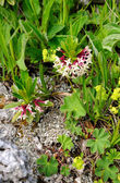 Rare wild flowers — Stock Photo