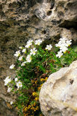 White flowers on a stone — Stock Photo