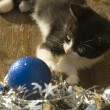 Stock Photo: Funny kitty christmas ornaments