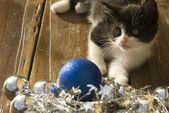 Noel ağacını süsler ile komik kedicik — Stok fotoğraf
