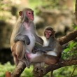 Stock Photo: Family of monkeys