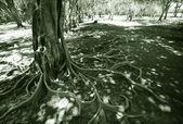 Wild tree in jungle — Stock Photo