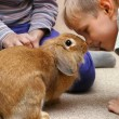 The boy with the rabbit — Stock Photo