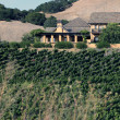Napa valley vineyard, California — Stockfoto