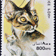 Royalty-Free Stock Photo: AFGHANISTAN - CIRCA 1996: A stamp printed in Afghan shows Devon Rex, circa 1996
