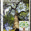 BOLIVIA - CIRCA 2011: A stamp printed in Bolivia dedicated to international year of forests, shows  bertholletia excelsa, circa 2011 - Lizenzfreies Foto