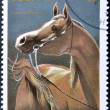 CUBA - CIRCA 1995: A stamp printed in Cuba showing Arab horse, circa 1995 — Foto Stock