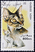 Afganistan - około 1996: znaczek wydrukowany w Afganistanie pokazuje devon rex, około 1996 — Zdjęcie stockowe