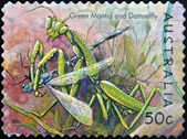 AUSTRALIA - CIRCA 2003: stamp printed in Australia, shows green mantid and damselfly, circa 2003 — Stockfoto