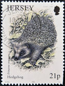 JERSEY - CIRCA 1999: A stamp printed in Jersey shows an Hedgehog , circa 1999 — Stockfoto