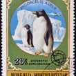 MONGOLIA - CIRCA 1980: A stamp printed in Mongolia shows Adelie Penguin - Pygoscelis adeliae, circa 1980 - Stock Photo
