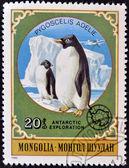 MONGOLIA - CIRCA 1980: A stamp printed in Mongolia shows Adelie Penguin - Pygoscelis adeliae, circa 1980 — Stock Photo