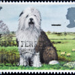GREAT BRITAIN - CIRCA 1978: A stamp printed in the Great Britain shows Old English Sheepdog, circa 1978 — Stock Photo