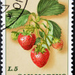 Stock Photo: SAN MARINO - CIRC1985: stamp printed in SMarino shows branch with strawberries, circ1985