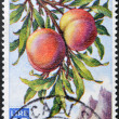 Stock Photo: SAN MARINO - CIRC1958: stamp printed in SMarino shows branch with peaches, circ1958