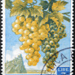 Stock Photo: SAN MARINO - CIRC1958: stamp printed in SMarino shows bunch of grapes, circ1958