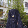 Woman with Mantilla participating in a procession of Holy Week in Granada - Stock Photo