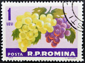 ROMANIA -CIRCA 1963: A stamp printed in Romania shows the grapes hangs on a branch, circa 1963. — Photo