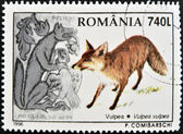 ROMANIA - CIRCA 1996: A stamp printed in the Romania, shows the Red fox (Vulpes vulpes), circa 1996 — 图库照片